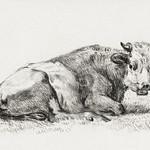 Lying cow (1825) by Jean Bernard (1775-1883). Original from The Rijksmuseum. Digitally enhanced by rawpixel. thumbnail