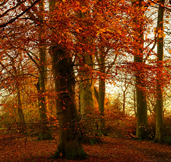 Forever Autumn (EmPhoto.) Tags: autumn sunset emmiejgee uk landscapepassion sonya7r sonyzeiss2470mm