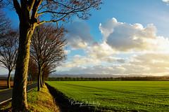 Nordharz (r.wacknitz) Tags: nordharz landkreisgoslar december abendlicht winter clouds wolken trees allee niedersachsen nikond7200 luminar18