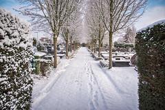 Sneeuw -1- (Jan 1147) Tags: sneeuw snow bomen trees begraafplaats kerkhof cemetery graveyard entrance ingang lievegem lovendegem belgium