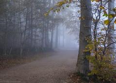 Foggy Path (katrin glaesmann) Tags: timmendorferstrand ostsee schleswigholstein balticsea bayoflübeck lübeckerbucht sleswickholsatia derechtenorden therealnorth brodtenerufer brodtenersteilufer fog nebel wald woods trees autumn