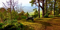 Picnic with a view! (BrianDerbyshire) Tags: uk northumberland coquet rothbury cragside view woods picnic picnictable panasonic lumix