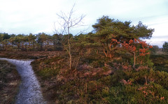 Heathland in wintertime (Zoom58.9) Tags: trees way brown pagan wintertime landscape nature bäume weg braun heide winterzeit winter landschaft natur europe europa germany deutschland cuxland sony affinity