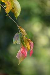 AUTUMN LEAVES (beatawozniak1968) Tags: autumn fall foliage flora macro closeup colours seasons changing october leaves bokeh outdoor nature naturephotography moment