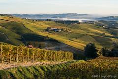 Le Langhe (beppeverge) Tags: barolo beppeverge colline dolcetto grapes italianlandscape lamorra langhe moscato novello paesaggioitaliano roero uva vigna vigneti vineyard vitigne wine
