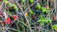 Nettle hill Circular Walk 18th November 2018 (boddle (Steve Hart)) Tags: stevestevenhartcoventryunitedkingdomcanon5d4 nettle hill circular walk 18th november 2018 steve hart boddle steven bruce wyke road wyken coventry united kingdon england great britain canon 5d mk4 6d 100400mm is usm ii 2470mm standard wild wilds wildlife life nature natural bird birds flowers flower fungii fungus insect insects spiders butterfly moth butterflies moths creepy crawley winter spring summer autumn seasons sunset weather sun sky cloud clouds panoramic landscape unitedkingdom gb