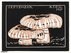 September (1917) by Julie de Graag (1877-1924). Original from The Rijksmuseum . Digitally enhanced by rawpixel. (Free Public Domain Illustrations by rawpixel) Tags: antique art artistic artwork drawing drawn handdrawn illustrated illustration illustrator juliedegraag mushroom old pdrijks publicdomain rijksmuseum september sketch stamp vintage woodcut