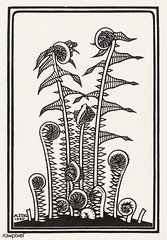 Ferns (1920) by Julie de Graag (1877-1924). Original from the Rijks Museum. Digitally enhanced by rawpixel. (Free Public Domain Illustrations by rawpixel) Tags: nam abstract antique art artwork background black botanical botany branch closeup decoration design drawing eucalyptus ferns flower fold garden handdrawn illustrated illustration isolated juliedegraag leaf name nature old pdrijks plant print publicdomain rijksmuseum seamless seamlesspattern sketch stem tree vintage woodcut