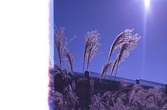 .the spaces amid love. (Camila Guerreiro) Tags: film expiredfilm fuji fujichrome 64t pentaxmesuper jeju island southkorea camilaguerreiro expired analog grain
