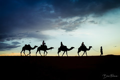 camellos (finsterphotography) Tags: landscape landscapelovers sunlight sunset travel travelphotography sahara desert walk walking morocco beautiful beauty skyscape sky clouds photography photo photooftheday photos