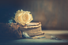 Soft like a feather (Ro Cafe) Tags: helios58mmf2 rose sonya7iii stilllife whiteroses feathers flower oldbook vintagelens darkmood romantic vintage old