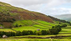 Farms in Thwaite on B6270 - Muker, North Yorkshire, England, UK (Paul Diming) Tags: pauldiming england greatbritain swaledale muker fall pasture unitedkingdom northyorkshire yorkshiredalesnationalpark yorkshireandthehumber britain landscape valley dailyphoto yorkshiredales keld richmondshire yorkshire uk d5000 thwaite richmond gb