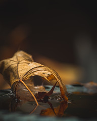 Final Days (andyk19831) Tags: autumn fall nature photography photo summer halloween travel love winter sun instagood fashion cool lightroom sunset light pumpkin october photoshop tree foto leaves beauty edit natureza fotografia retrato life bhfyp