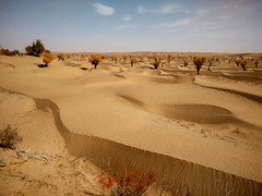 Por la cuenca del Deriya. Desierto de Taklamakán. China (escandio) Tags: taklamakan populuseuphratica keriya china2018 china 2018 2 xinqian