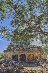 Xcalumkin 5549 ch (Emilio Segura López) Tags: xcalumkin pirámide arqueología arquitectura arquitecturamaya árbol columna campeche méxico
