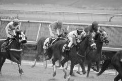 "2018-11-30 (55) r7 other horses came in safely - monochrome (JLeeFleenor) Tags: photos photography md marylandhorseracing maryland marylandracing laurelpark monochrome bw blackwhite jockey جُوكِي ""赛马骑师"" jinete ""競馬騎手"" dżokej jocheu คนขี่ม้าแข่ง jóquei žokej kilparatsastaja rennreiter fantino ""경마 기수"" жокей jokey người horses thoroughbreds equine equestrian cheval cavalo cavallo cavall caballo pferd paard perd hevonen hest hestur cal kon konj beygir capall ceffyl cuddy yarraman faras alogo soos kuda uma pfeerd koin حصان кон 马 häst άλογο סוס घोड़ा 馬 koń лошадь outdoors outside"