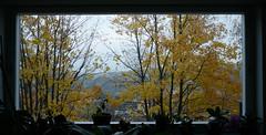 Autumn view from my window (Elmar Eye) Tags: dawn november gothenburg göteborg autumn leaves golden
