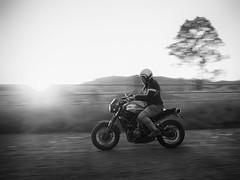 Escape to the county (Petra Ries Images) Tags: yamahaxsr700 bw blackandwhite schwarzweis sunset slowshutterspeed motorbike motorcycle motorrad motorradfahrer rider yamaha panning mitziehen motionblur bewegungsunschärfe backlit sonnenuntergang contrejour gegenlicht rural country australia australien dirtroad