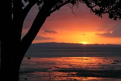 Sundown (Karen Pincott) Tags: sunset dusk reflections thames coast tree silhouette sea sun newzealand coromandelpeninsula cropped