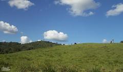 Naturalmente verde... (alordelo) Tags: viagens travel clouds landscape nature bahia céu brasil brazil paisagens color cores azul nuvens verde sky green blue arvore ilovenature estrada natureza trilhas visual pénaestrada offroad tree contraluz rodoviabr101 rodoviaba120 kodak alordelo lordelo