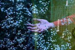 (emmakatka) Tags: hand bokeh shadow shadows flowers summer woman dreamy surreal emmakatka minnesota