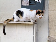 Watching (pefkosmad) Tags: rhodes rodos rhodesoldtown rhodestown backstreets holiday vacation vacances exploring cats feralcats greece greekislands griechenland dodecanese town tortoiseshell