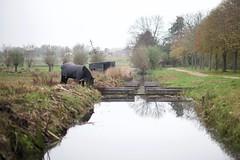 Ommoordse veld, Rotterdam, Netherlands (AperturePaul) Tags: ommoordseveld rotterdam netherlands nikon d600 nature autumn horse