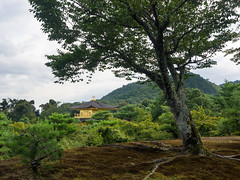 Tree in a park with temple in background (beeldmark) Tags: tempel kyoto bergen natuur gebouw bos japan zomervakantie building forest kansai kyōto nature nihon nippon summerholiday berg mountain mountains 京都 山 日本 関西 kinkakuji goldenpavillion 金閣寺 鹿苑寺 rokuonji お寺 smcpentaxda1224mmf4edalif