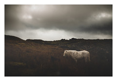 A Little Moor Conspicuous (picturedevon.co.uk) Tags: fogintor quarry dartmoor nationalpark devon uk landscape sky clouds winter weather wildlife animal horse pony outside grey rocks light dark canon wwwpicturedevoncouk
