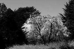spring (PHOTOPHANATIC1) Tags: spring