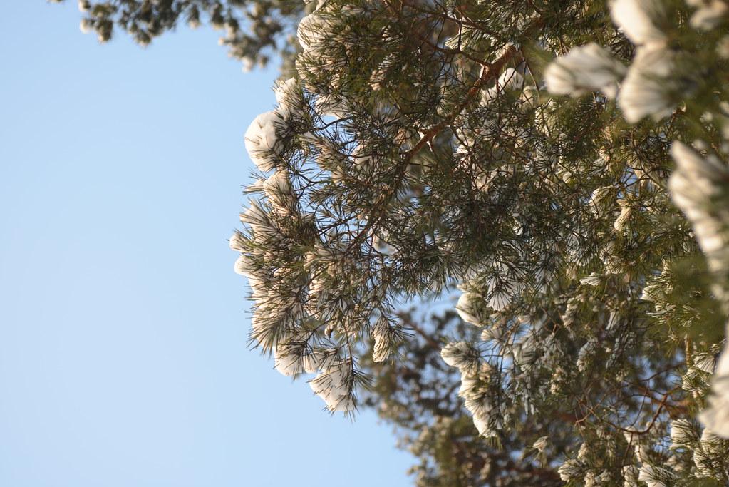 фото: Winter