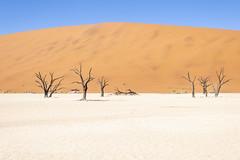 _RJS4683 (rjsnyc2) Tags: 2019 africa d850 desert dunes landscape namibia nikon outdoors photography remoteyear richardsilver richardsilverphoto safari sand sanddune travel travelphotographer animal camping nature tent trees wildlife