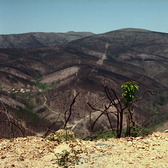 And yet life prevails (lebre.jaime) Tags: highland mountain mountainrange desolation fire devastation portugal beira kodak ektar100 contax g2
