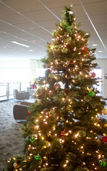 UC Christmas Tree (UWW University Housing) Tags: uww uwwhitewater uwwhousing trees happyholidays