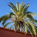 Palm / Bab Er-Robb