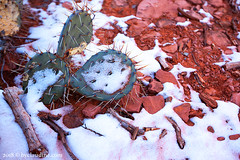 little horse trail 5 (by claudine) Tags: littlehorsetrail sedona arizona hike hiking view scenic national park winter cold snow green prickly cactus red rock