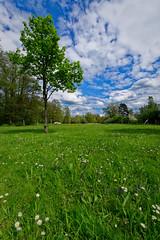 DSC_0751_Arbre (Boubs2001) Tags: grass herbe tree arbre clouds nuages nuage cloud flowers fleurs colour couleur green vert nikon d5500 sigma 1020mm yveline france