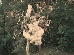 CelleLigure2019_Y35_00055 (stegdino) Tags: celle ligure trunk legno wood sculpture statue