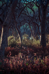 Something Magic (Andreas Balg) Tags: nature italy tree atmosphere magic beautiful landscape toscana