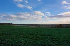 Rougham Hill (Martin Pettitt) Tags: 2018 autumn burystedmunds dslr nikond7100 november outdoor path roughamhill suffolk trees uk