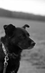 Naomi (salparadise666) Tags: nikon f3 hp e series 50mm rollei retro 80s caffenol cl 45min semistand nils volkmer analogue film camera slr bw black white monochrome dog portrait vertical dof bokeh