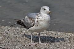 Bird (Hugo von Schreck) Tags: hugovonschreck bird vogel denhaag zuidholland niederlande fantasticnature canoneos600d tamron70300mm