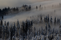 Foggy Winter (Bayerwaldteam) Tags: winter nebel schnee bäume fog snow trees
