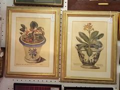 Antique hand-coloured botanical prints - £35 each (Northcote Road Antiques Market) Tags: antiques