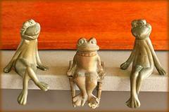 King of the frogs (Gillian Everett) Tags: amphibian frog frogs brass 5 119 2019 365