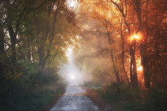 Walking towards the fog (xkolba) Tags: misty scenery autumn foggy mist forest morning trees fog outdoor landscape podlasie poland wood sunbeam sun sunrise tree backlit road