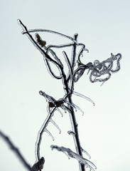 Attack of the Stick Alien (oldoinyo) Tags: trees ice glazing freezingrain icestorm northcarolina