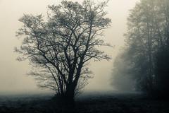 nebel (iltis-aura) Tags: herbst nebel tree nature fog forest mist outdoors landscape spooky branch season silhouette woodland mystery winter scenics horror autumn backgrounds dark morning everypixel hamburgerfotofreaks