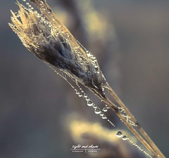 Bright like a Diamond (Light and shade by Monika) Tags: makro light closeup nature waterdrops
