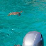Na Pali boat Schildkröten Kauai, Hawaii thumbnail